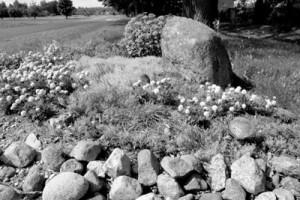 Puķes akmeņu ielenkumā
