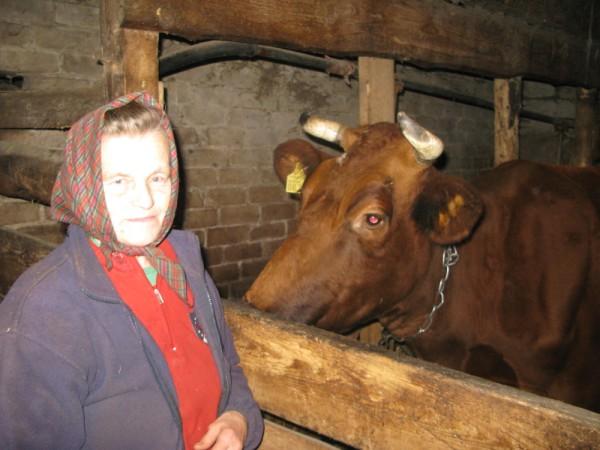 PATĪK, KA PARUNĀJAS. Sāra gādā, lai saimniecei Ainai Seržānei vienmēr tiktu gards piens. FOTO: Sarmīte Feldmane